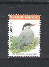 BELGIQUE - BUZIN - OISEAUX / BIRDS (STERNE ARCTIQUE) - 1V**MNH
