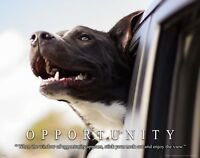 Window of Opportunity Motivational Poster Art Print Dog Vet Classroom Wall Decor