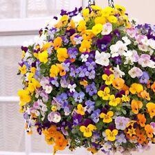 VIOLA CORNUTA MIX (100 SEEDS) BIENNIAL FLOWER - Ideal for hanging baskets