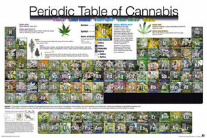 Poster Periodic Table of Cannabis Pot Weed Marijuana