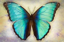 Deidamia Neoptolemus Buterfly   by Richard Reynolds Canvas Giclee Museum Wrapped