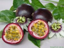 Panama Red Passion fruit/ Passiflora edulis 10 Finest Seeds
