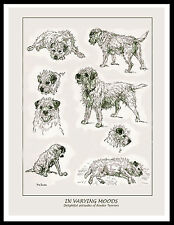 BORDER TERRIER DOGS IN VARIOUS MOODS LOVELY VINTAGE STYLE DOG PRINT POSTER