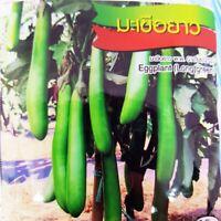 Eggplant(Long green) Thai vegetable plant high quality seeds 200 seeds CHAI TAI