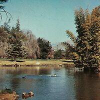 Vintage Postcard Murray Park Lake Porterville California  S5