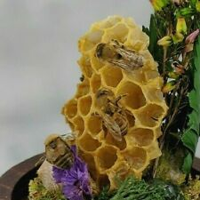J41 Entomology Taxidermy Honey Bee (bees) & comb Glass dome display curiosities