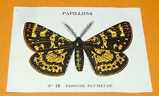 CHROMO 1932 CASINO N 19 PAPILLONS FIDONIE PLUMEUSE