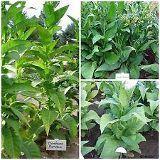 südamerikanische Tabaksamen Samen Saatgut Kombi-Paket 3