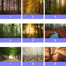 Wald Bäume Natur Vlies Fototapeten (FW-WM) Tapeten
