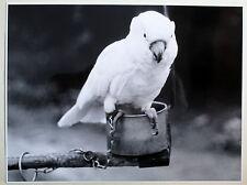 Original Foto Großformat Weißer Papagei Hagenbeck 27.08.1967 Hamburg