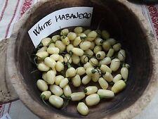 Habanero White - 5+ seeds - EXOTIC and ELEGANT!