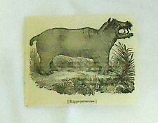 1832 small magazine engraving ~ Hippopotamus