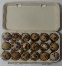 54 Frische Wachteleier es sind Speiseeier  Eier,Wachtel,Wachteln