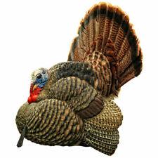 Avian X Strutter Turkey Decoy - New