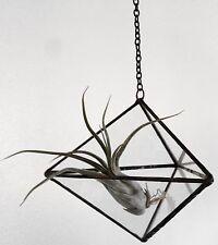 Hanging Pyramid Terrarium
