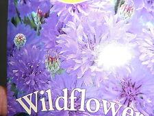 40 X SEEDS CORNFLOWER CENTAUREA CYANUS HARDY ANNUAL WILD FLOWER PURPLE