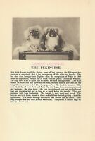 Pekingese Dog Rare Vintage Photo & Breed Description 1931 Peke Dogs