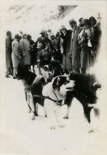PHOTO ANCIENNE - VINTAGE SNAPSHOT - ANIMAL CHIEN TRAINEAU MONTAGNE SUISSE - DOG