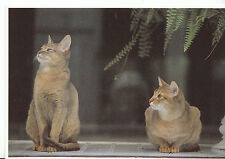 Animals Postcard - Cats - Two Cats In The Window - Sitting Down    AB1816