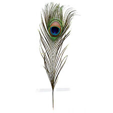"""Pack of 12 Peacock Feathers Approx 10"""" to 12"""" Inches Natural Peacock Eye F D7K5"""