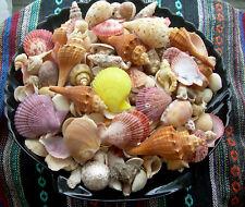 3 lbs. Mixed Seashells Sea Shells Crafts Decorating Collectible Lot Free Ship!