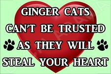 GINGER CATS CAN'T BE TRUSTED THEY WILL STEAL YOUR HEART FRIDGE MAGNET CAT