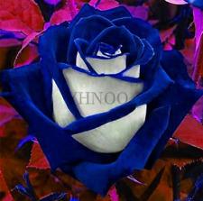 200 PCS Seeds Rose Garden Bonsai Flowers Plants Home Pot Easy Growing NEW 2018 N