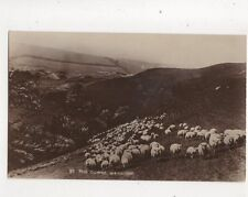 The Downs Wannock Sussex Sheep Vintage RP Postcard W Brooker 437b