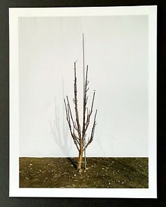 Jessica Rath: Clone Column with Early Pubescence 2012 color photograph signed