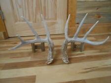 Clean 5x5 Whitetail Deer sheds 149 5/8 Antlers mule mount taxidermy elk rack
