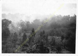 Original Photo MADAGASCAR 1948 forêt n56
