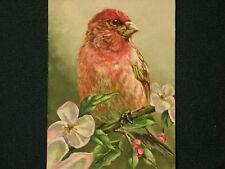 Purple finch bird Apple blossom wildlife print