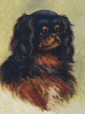 CAVALIER KING CHARLES TOY SPANIEL DOG GREETINGS NOTE CARD BLACK & TAN HEAD STUDY