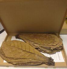 ★★★ ~50 XXL (150Gramm) Seemandelbaumblätter Catappa Leaves 20-30cm TopQualität ★