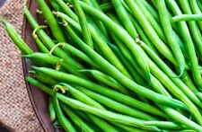Asparagus bean Green Seeds snake bean organic seeds Ukraine 5g Farmer's dream