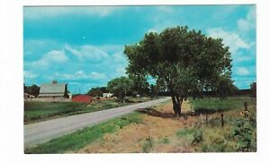 mid century Cattle Ranch on a Modern Highway postcard