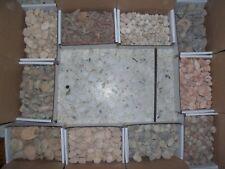 1/4 pound lbs fossil ammonites, trilobites, shells, coral, sea urchins, 10 types