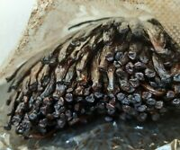10 gousses de vanille classe A Tahiti Tahitensis 15-17 cm et environ 20 g
