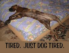 METAL FRIDGE MAGNET Dog On Back In Bed Tired Just Dog Tired Humor Dogs