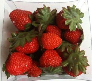 24 künstliche Erdbeeren Streu Deko Kunst Obst Sommer Strawberry Attrappe Früchte