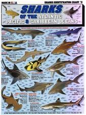 SHARKS of the Atlantic, Pacific, & Caribbean - ID Chart -Tightline Tightlines #2