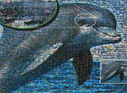 """DOLPHIN"" 1000pc Sea Life Close Up Ocean Photomosaics BOXLESS Jigsaw Puzzle 100%"