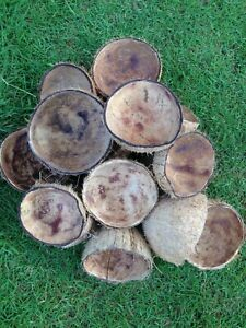 COCONUT SHELL HALVES Eco-friendly Natural Coconut Bowl 100 Halves Coconut Shell