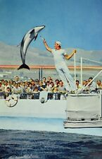 The High-Jumping Porpoise Marineland of the Pacific Calif. Vintage Postcard P58