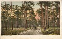Pine Woods - FLORIDA - horse & buggy