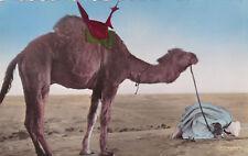 Camel, Scenes Et Types, Derniere Priere Avant Le Depart, Casablanca, 1920-30s