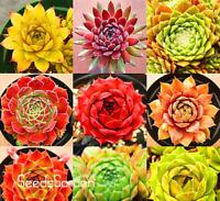 Garden Plants 100 PCS Seeds Sempervivum Mix Succulent Flowers Bonsai Potted NEW
