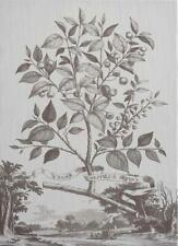 WALL ART PRINT INSPIRED BY ABRAHAM MUNTING MUNTINGS TREE FLOWER 29X40 WHIT