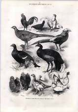 1872 Harrison Weir Exhibition Of Gamebirds And Bantams Crystal Palace