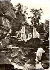 Tierpark Berlin - Ausschnitt aus der Eisbärenfreianlage im Tierpark - 1967
